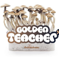 Microdose - Magic mushroom grow kit